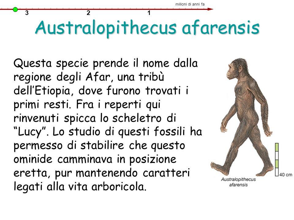 Australopithecus afarensis Questa specie prende il nome dalla regione degli Afar, una tribù dellEtiopia, dove furono trovati i primi resti. Fra i repe