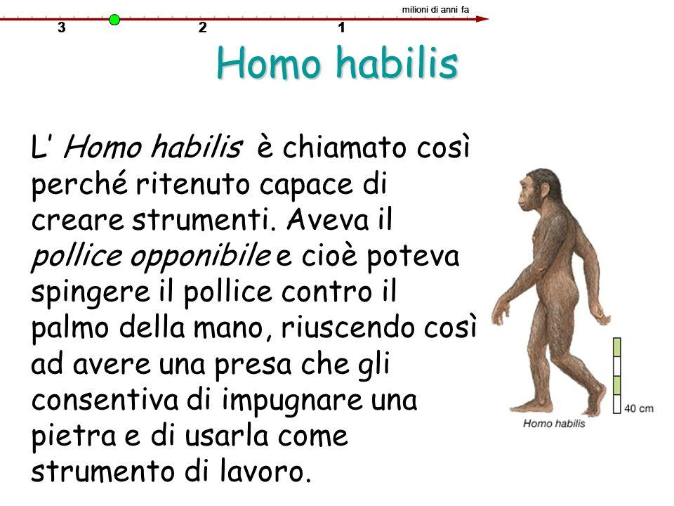 Homo habilis L Homo habilis è chiamato così perché ritenuto capace di creare strumenti. Aveva il pollice opponibile e cioè poteva spingere il pollice