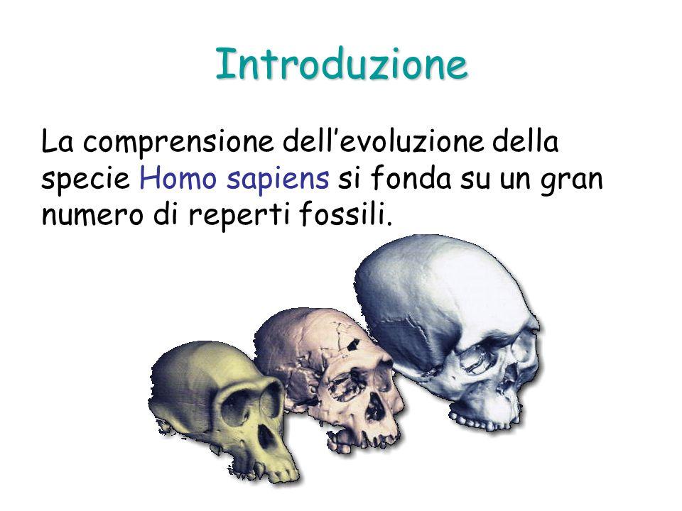 Introduzione La comprensione dellevoluzione della specie Homo sapiens si fonda su un gran numero di reperti fossili.