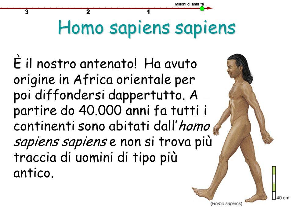 Homo sapiens sapiens È il nostro antenato! Ha avuto origine in Africa orientale per poi diffondersi dappertutto. A partire do 40.000 anni fa tutti i c