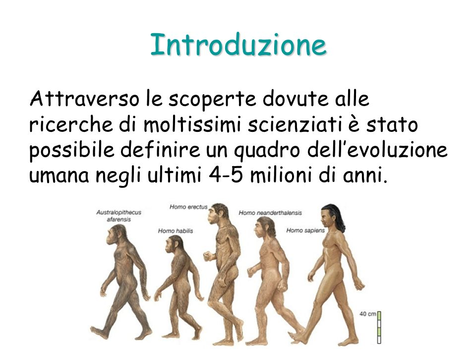 Introduzione Attraverso le scoperte dovute alle ricerche di moltissimi scienziati è stato possibile definire un quadro dellevoluzione umana negli ulti