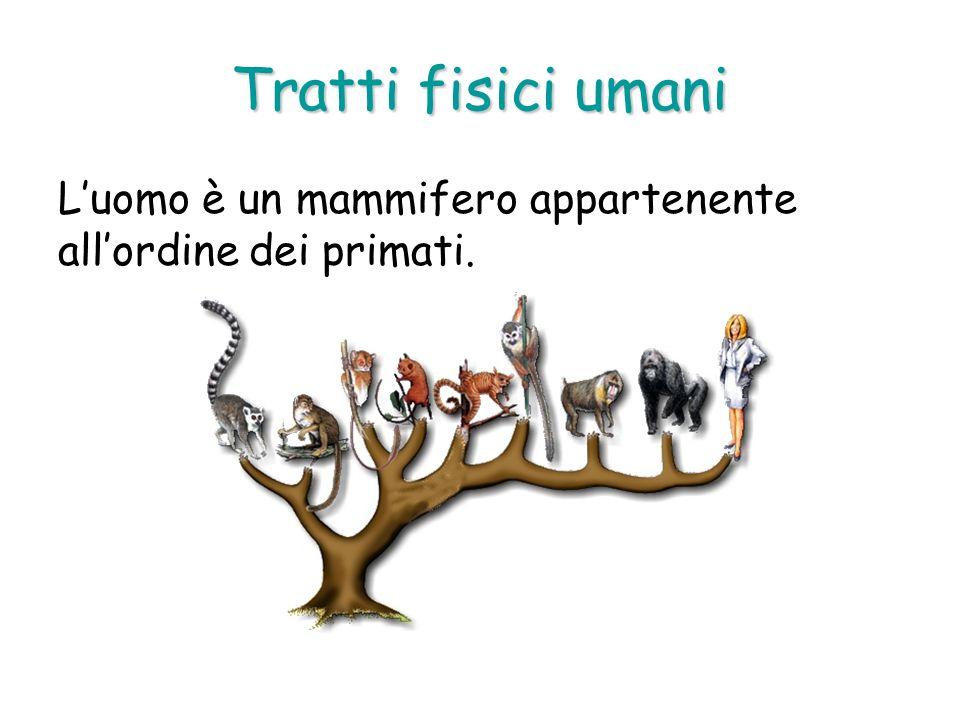 Tratti fisici umani Luomo è un mammifero appartenente allordine dei primati.