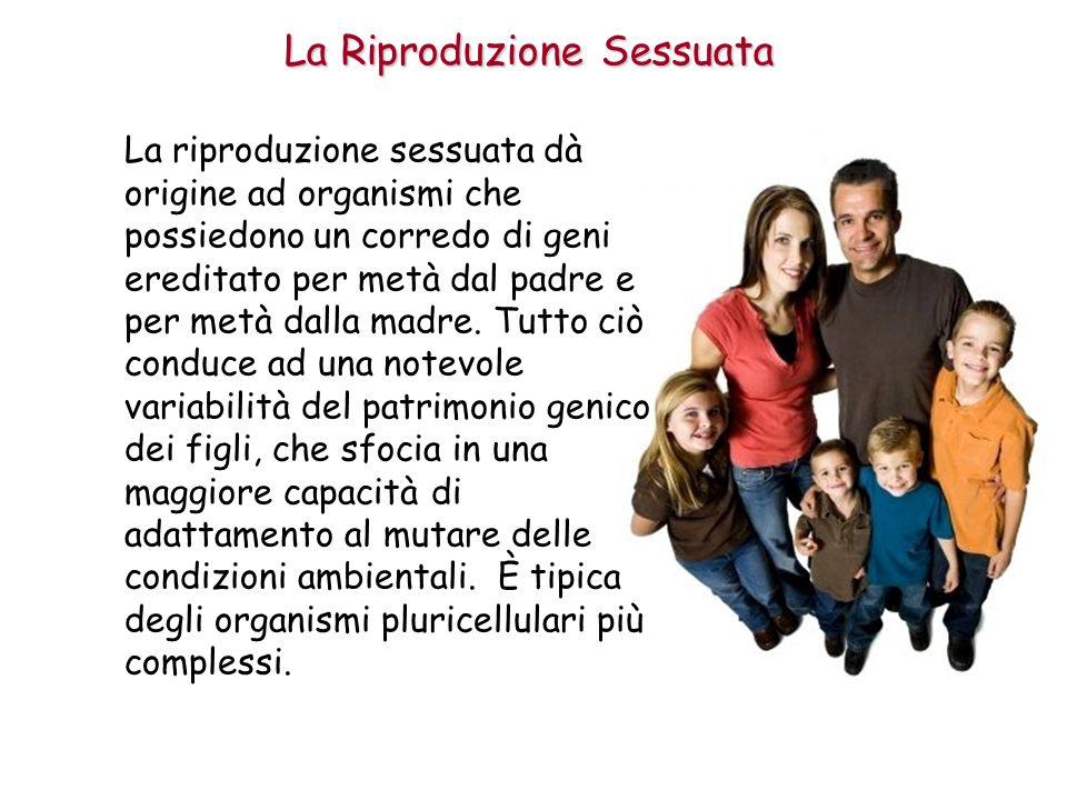 La riproduzione sessuata dà origine ad organismi che possiedono un corredo di geni ereditato per metà dal padre e per metà dalla madre.