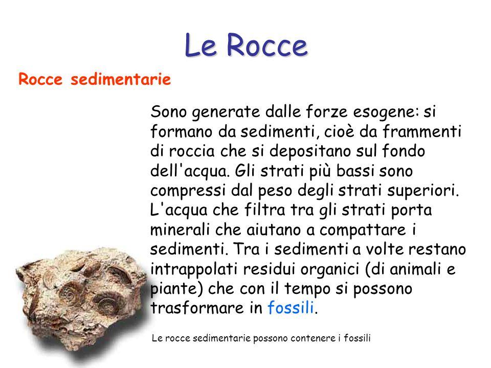 Le Rocce Rocce sedimentarie Le rocce sedimentarie possono contenere i fossili Sono generate dalle forze esogene: si formano da sedimenti, cioè da fram