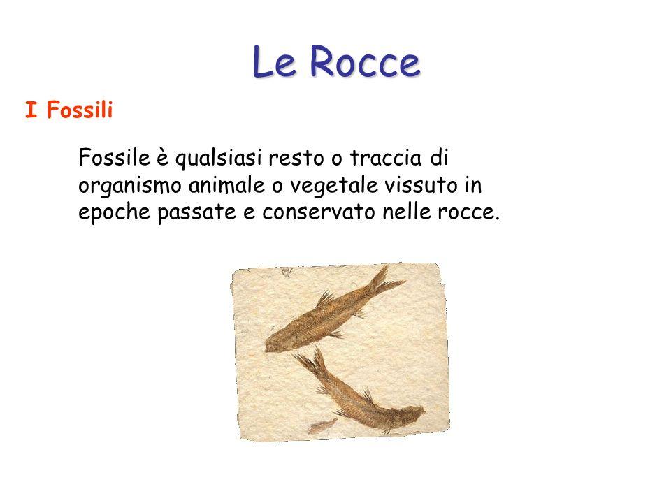 Le Rocce I Fossili Normalmente gli organismi morti vengono degradati dai decompositori.