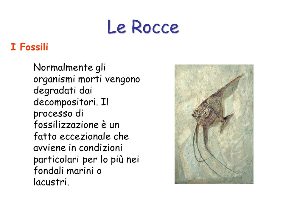 Le Rocce I Fossili Normalmente gli organismi morti vengono degradati dai decompositori. Il processo di fossilizzazione è un fatto eccezionale che avvi