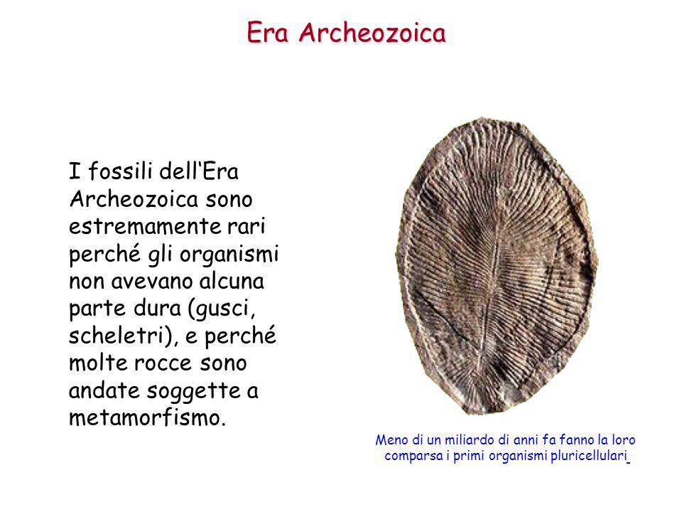 I fossili dellEra Archeozoica sono estremamente rari perché gli organismi non avevano alcuna parte dura (gusci, scheletri), e perché molte rocce sono