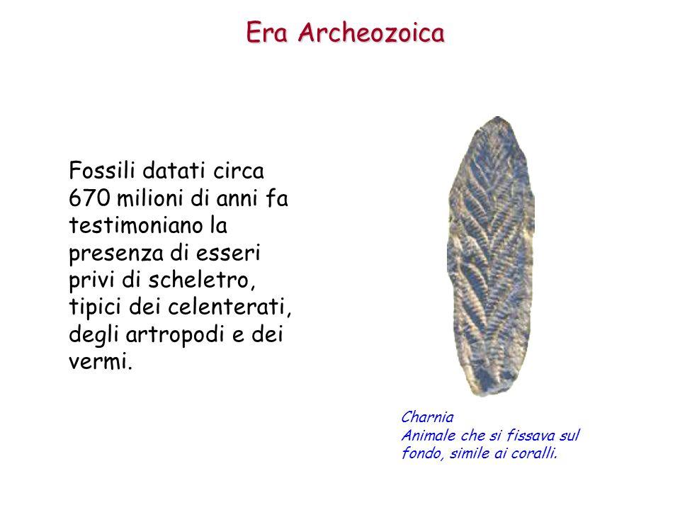 Fossili datati circa 670 milioni di anni fa testimoniano la presenza di esseri privi di scheletro, tipici dei celenterati, degli artropodi e dei vermi