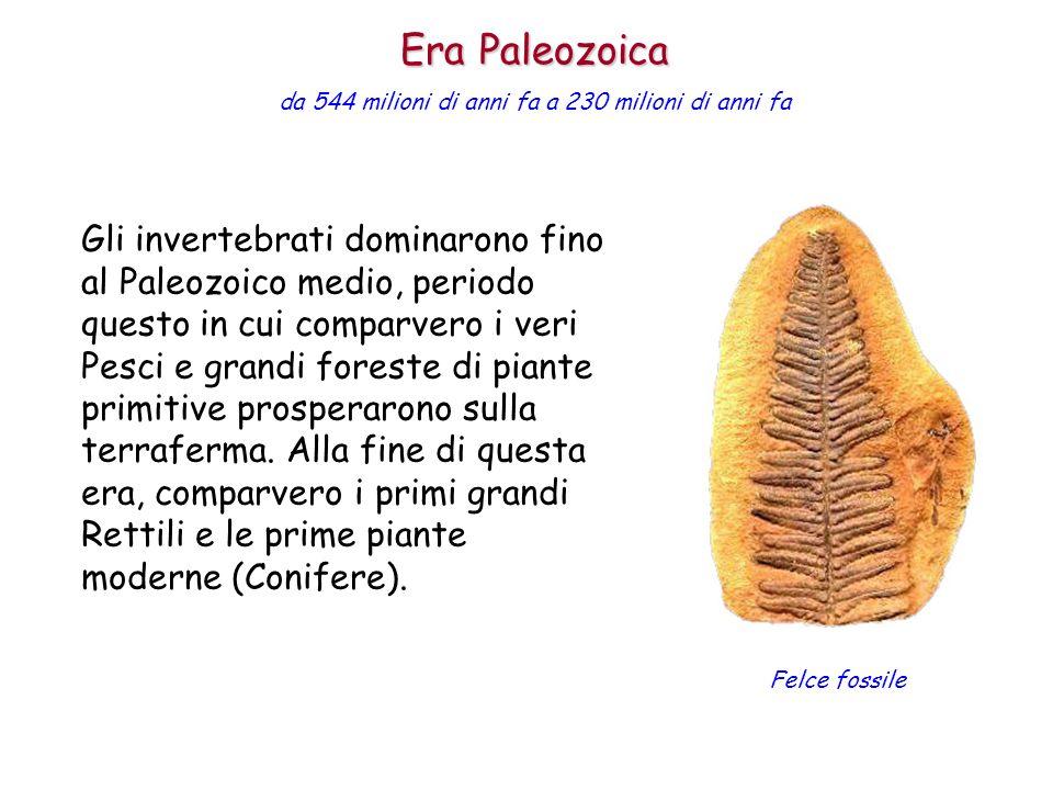 Gli invertebrati dominarono fino al Paleozoico medio, periodo questo in cui comparvero i veri Pesci e grandi foreste di piante primitive prosperarono