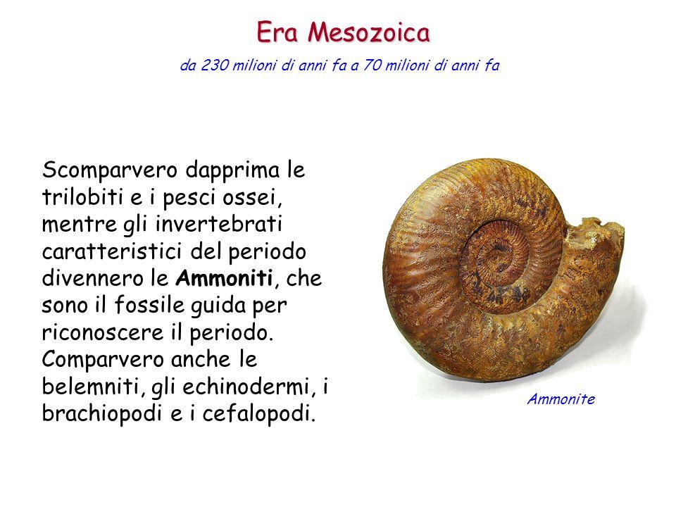 Scomparvero dapprima le trilobiti e i pesci ossei, mentre gli invertebrati caratteristici del periodo divennero le Ammoniti, che sono il fossile guida
