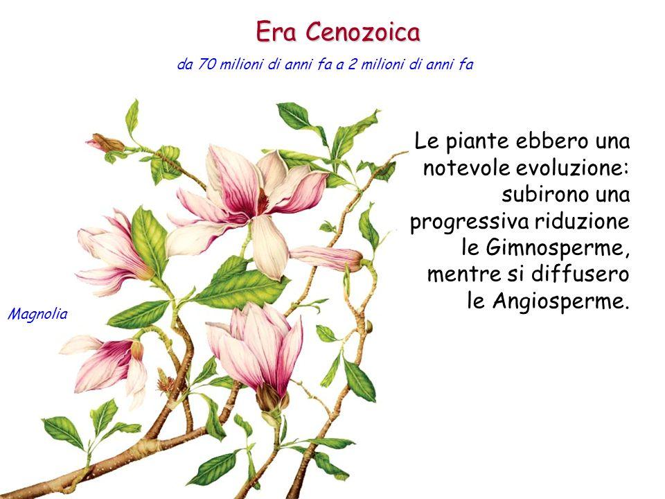 Le piante ebbero una notevole evoluzione: subirono una progressiva riduzione le Gimnosperme, mentre si diffusero le Angiosperme. Era Cenozoica da 70 m