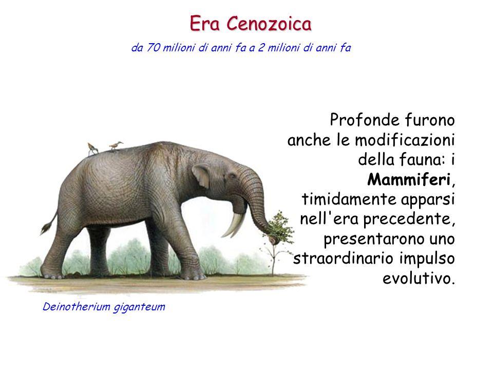 Profonde furono anche le modificazioni della fauna: i Mammiferi, timidamente apparsi nell'era precedente, presentarono uno straordinario impulso evolu