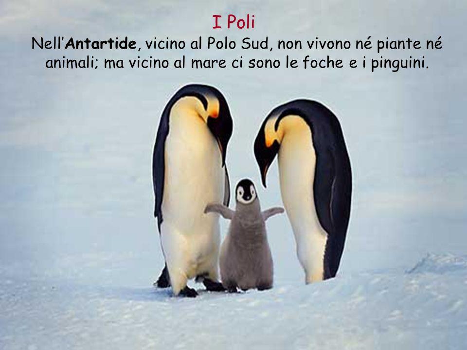 NellAntartide, vicino al Polo Sud, non vivono né piante né animali; ma vicino al mare ci sono le foche e i pinguini. I Poli