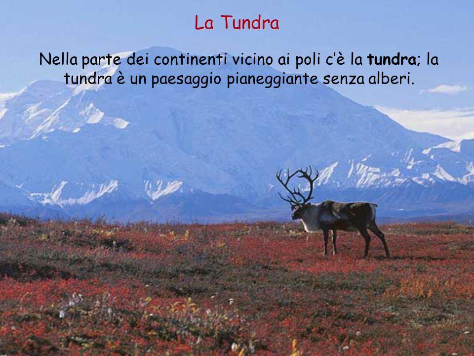 Nella parte dei continenti vicino ai poli cè la tundra; la tundra è un paesaggio pianeggiante senza alberi. La Tundra