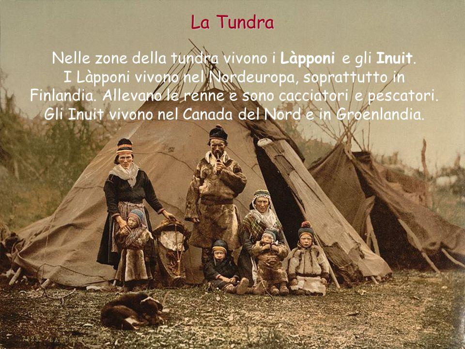 Nelle zone della tundra vivono i Làpponi e gli Inuit. I Làpponi vivono nel Nordeuropa, soprattutto in Finlandia. Allevano le renne e sono cacciatori e