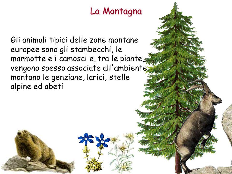 Gli animali tipici delle zone montane europee sono gli stambecchi, le marmotte e i camosci e, tra le piante, vengono spesso associate all'ambiente mon
