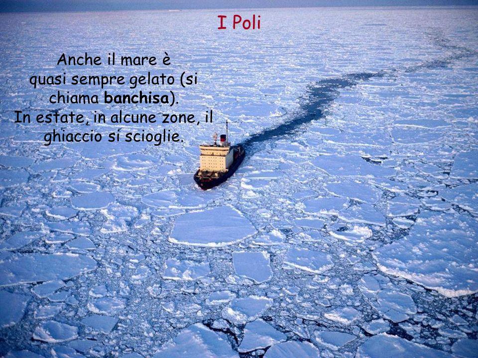 Anche il mare è quasi sempre gelato (si chiama banchisa). In estate, in alcune zone, il ghiaccio si scioglie. I Poli