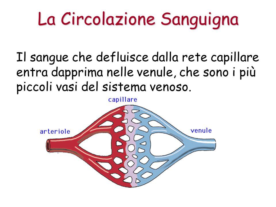 Il sangue che defluisce dalla rete capillare entra dapprima nelle venule, che sono i più piccoli vasi del sistema venoso.