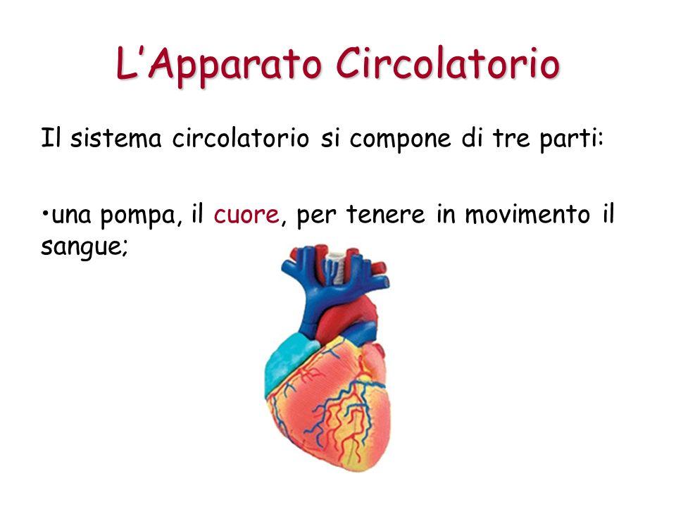 Il sistema circolatorio si compone di tre parti: una pompa, il cuore, per tenere in movimento il sangue; LApparato Circolatorio