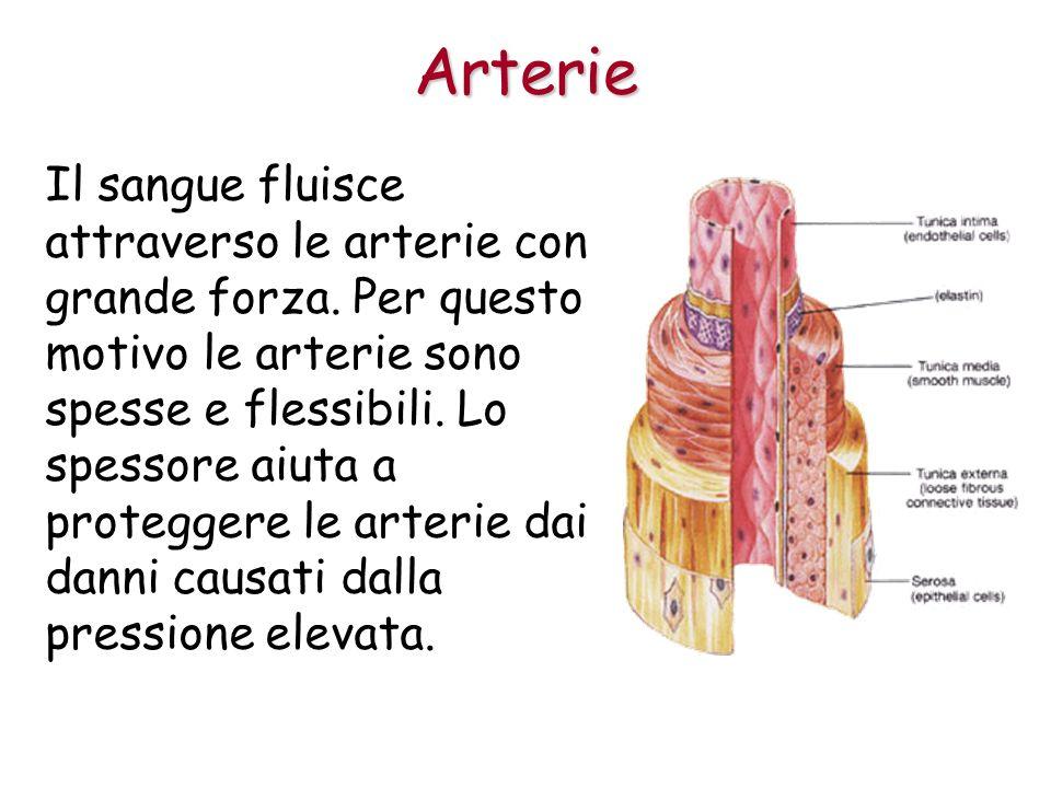 Il sangue fluisce attraverso le arterie con grande forza.