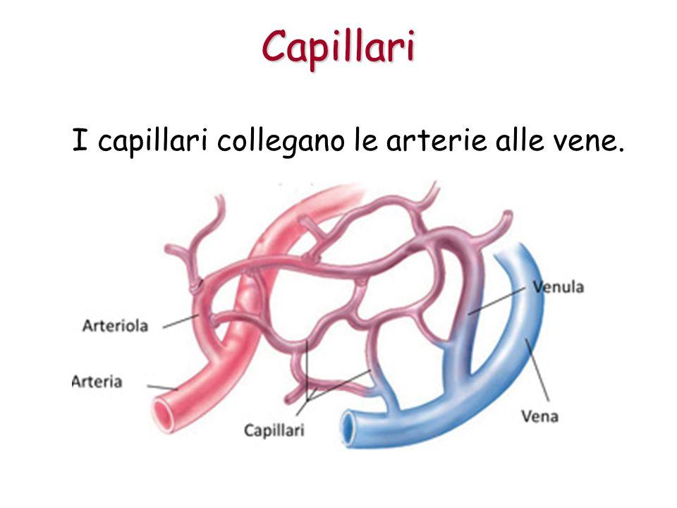 Capillari I capillari collegano le arterie alle vene.