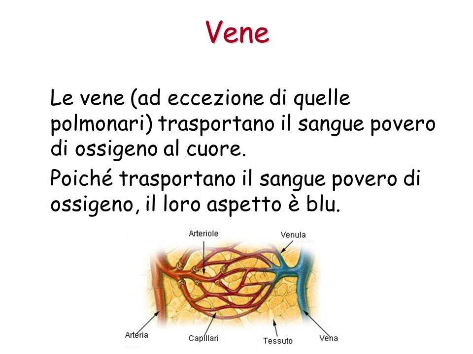 Vene Le vene (ad eccezione di quelle polmonari) trasportano il sangue povero di ossigeno al cuore.