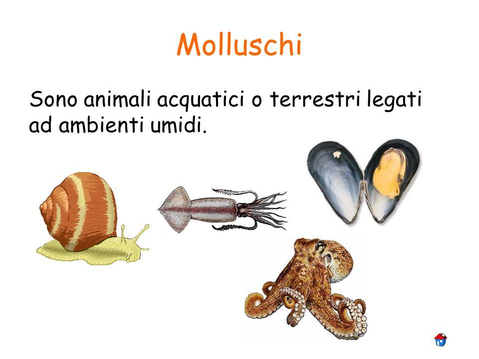 Molluschi Sono animali acquatici o terrestri legati ad ambienti umidi.