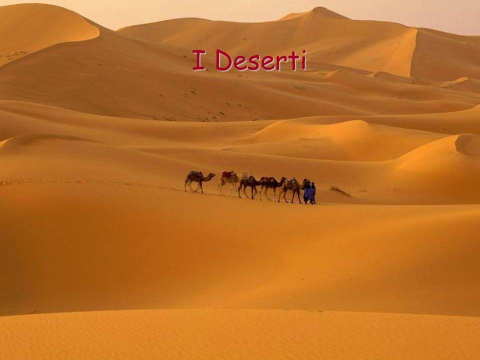 Il Predeserto Il predeserto è la zona di passaggio dal deserto alle zone con il clima meno secco.