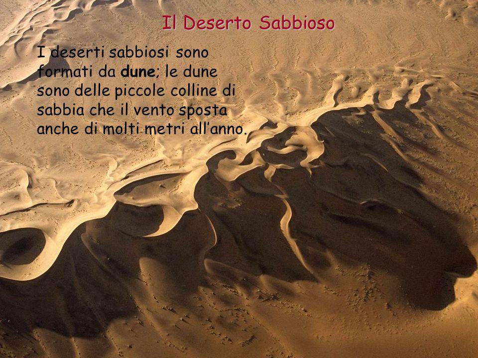 Il Deserto Sabbioso I deserti sabbiosi sono formati da dune; le dune sono delle piccole colline di sabbia che il vento sposta anche di molti metri all