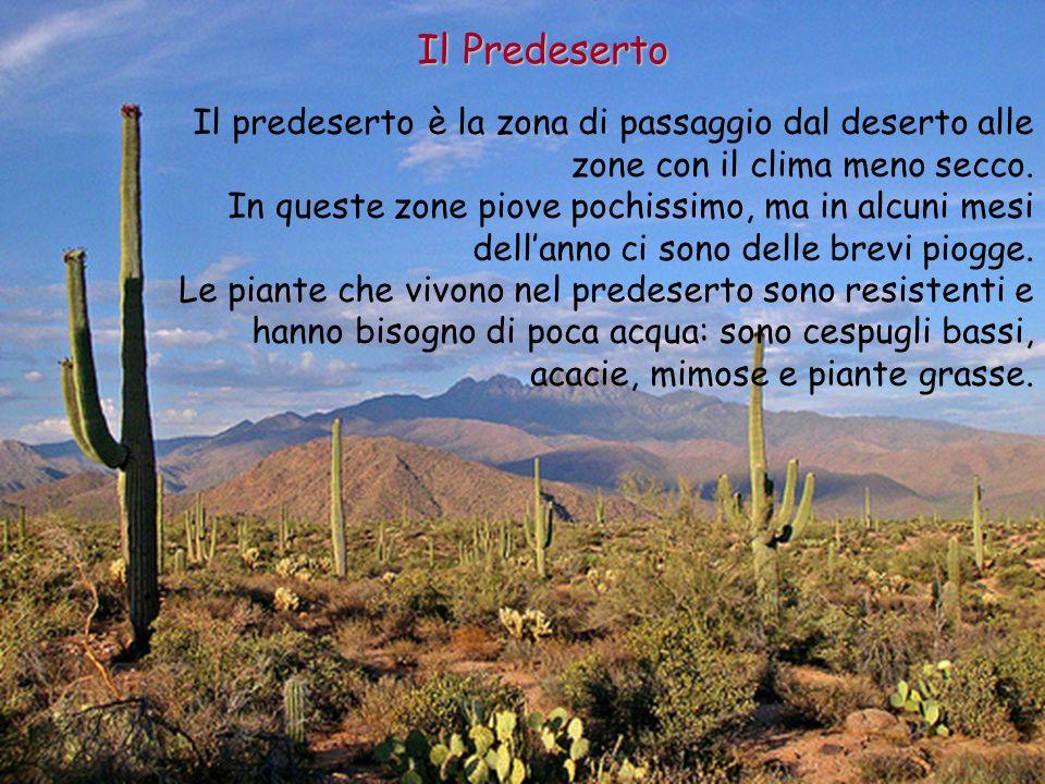 Il Predeserto Il predeserto è la zona di passaggio dal deserto alle zone con il clima meno secco. In queste zone piove pochissimo, ma in alcuni mesi d