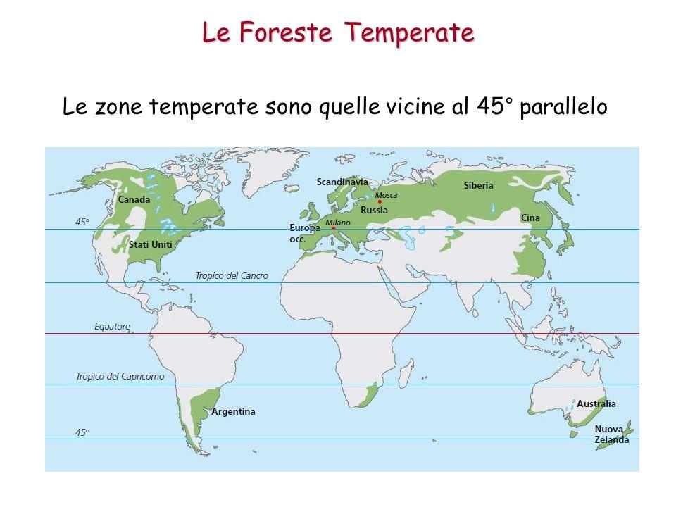 Sono le zone dove le estati sono calde e gli inverni sono piuttosto freddi con giornate corte.