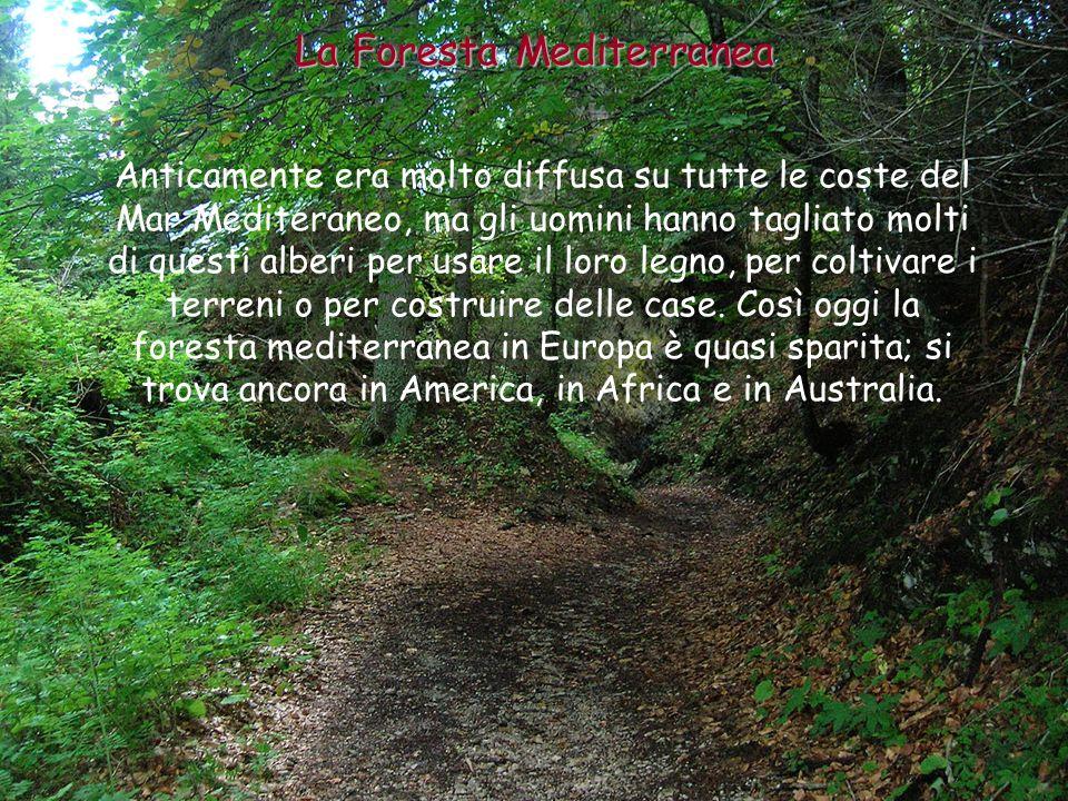 La foresta di latifoglie è formata da alberi con il legno duro e la chioma folta.