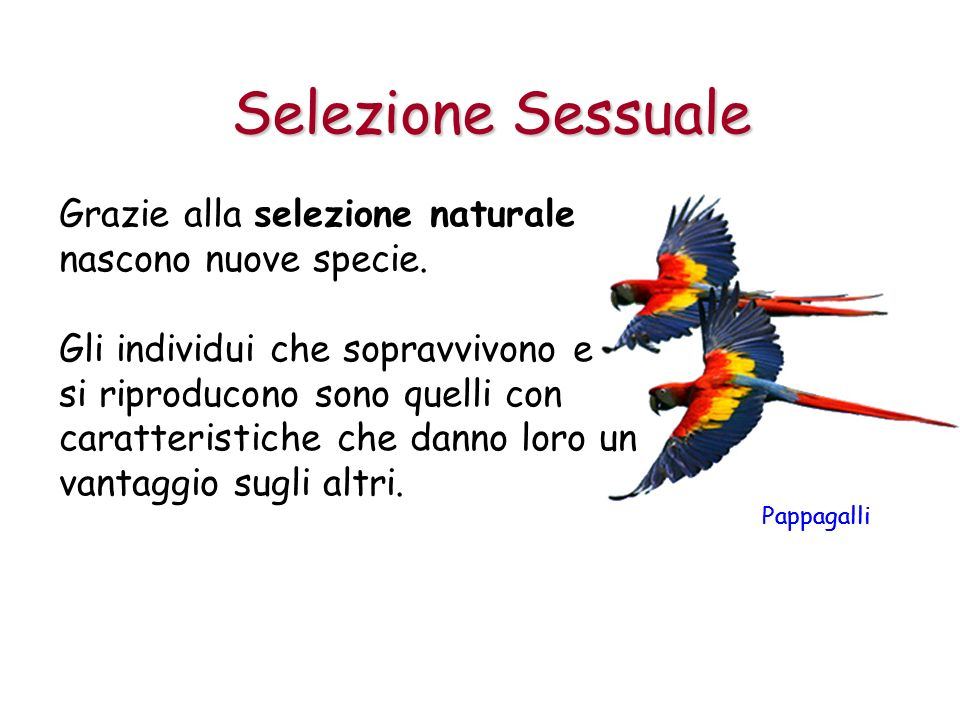 Pappagalli Grazie alla selezione naturale nascono nuove specie. Gli individui che sopravvivono e si riproducono sono quelli con caratteristiche che da