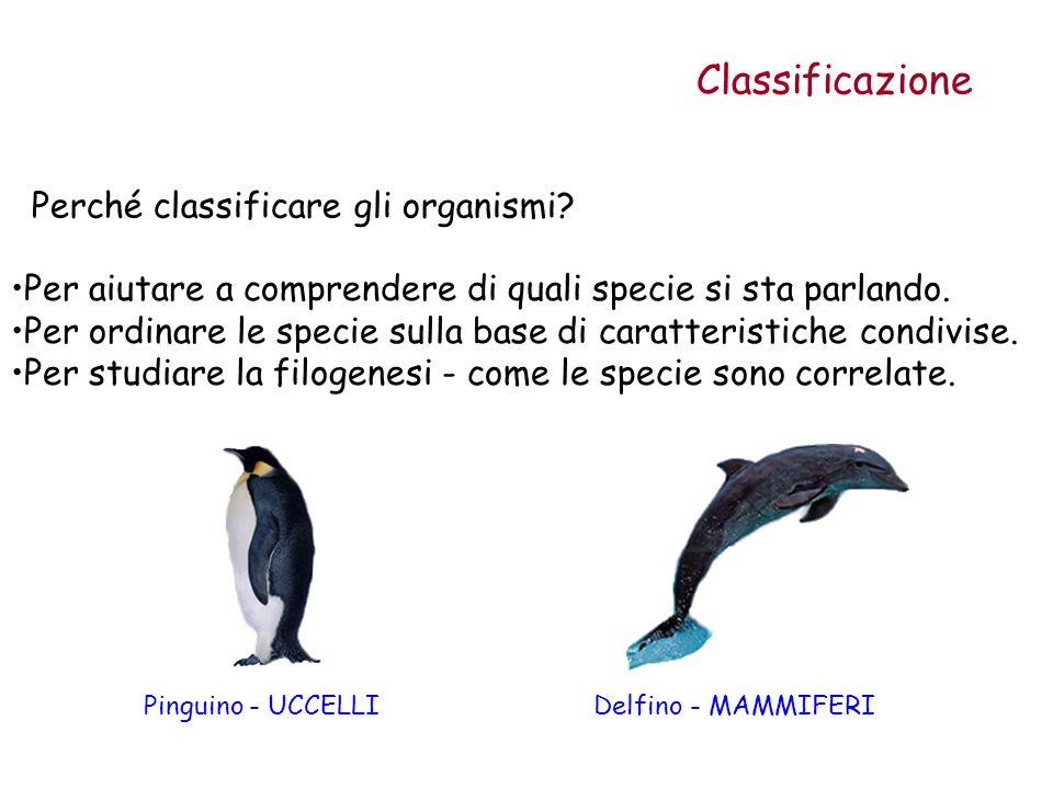 Classificazione Perché classificare gli organismi? Pinguino - UCCELLIDelfino - MAMMIFERI Per aiutare a comprendere di quali specie si sta parlando. Pe