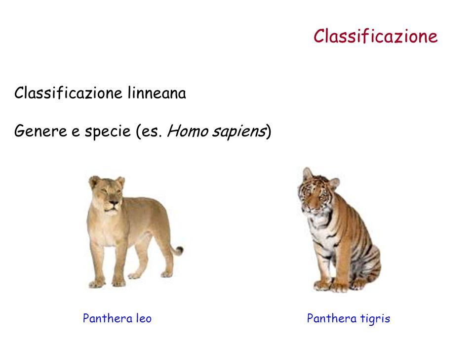 Classificazione Classificazione linneana Genere e specie (es. Homo sapiens) Panthera leoPanthera tigris