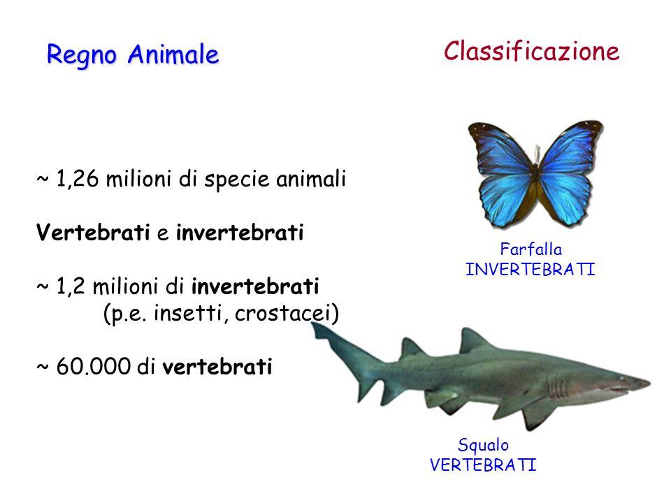 Classificazione Regno Animale ~ 1,26 milioni di specie animali Vertebrati e invertebrati ~ 1,2 milioni di invertebrati (p.e. insetti, crostacei) ~ 60.