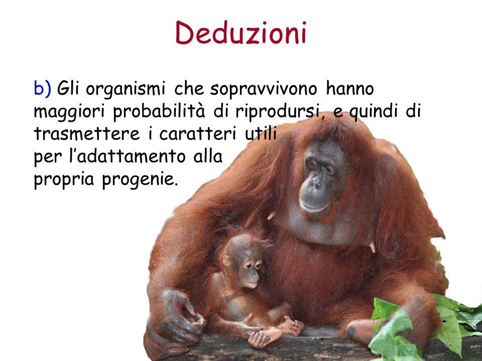 Deduzioni b) Gli organismi che sopravvivono hanno maggiori probabilità di riprodursi, e quindi di trasmettere i caratteri utili per ladattamento alla