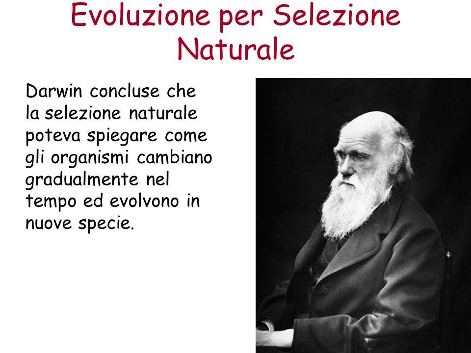 Evoluzione per Selezione Naturale Darwin concluse che la selezione naturale poteva spiegare come gli organismi cambiano gradualmente nel tempo ed evol