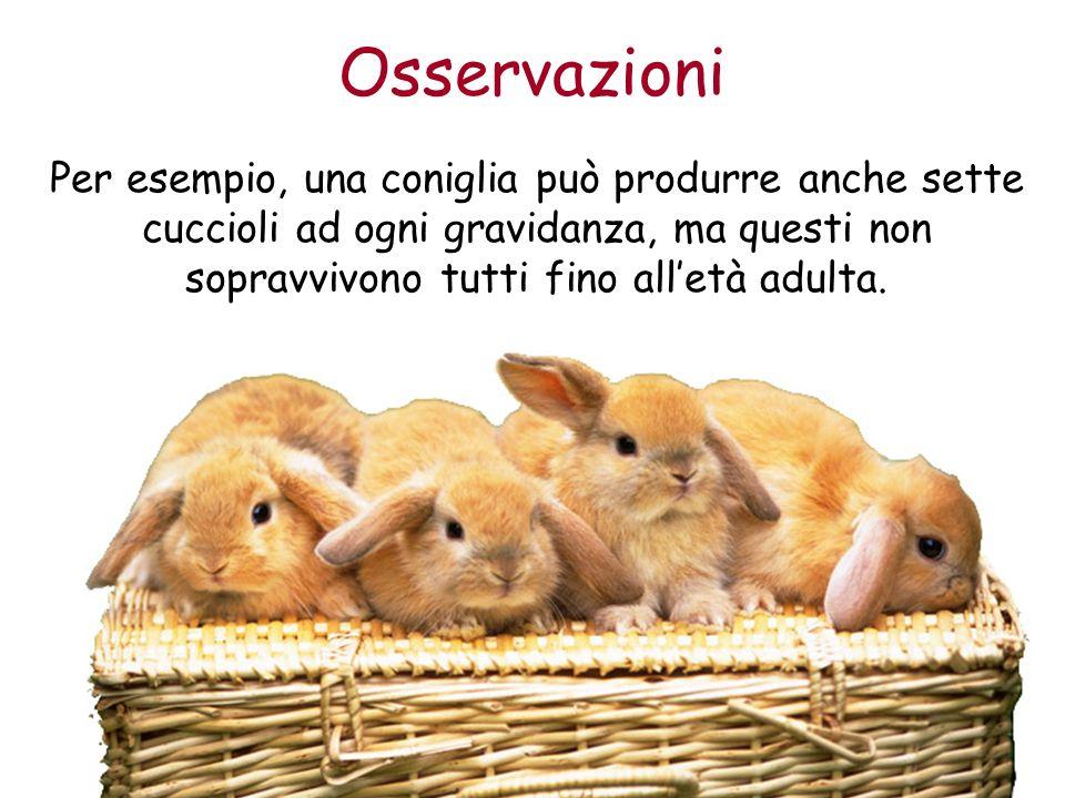 Osservazioni Per esempio, una coniglia può produrre anche sette cuccioli ad ogni gravidanza, ma questi non sopravvivono tutti fino alletà adulta.