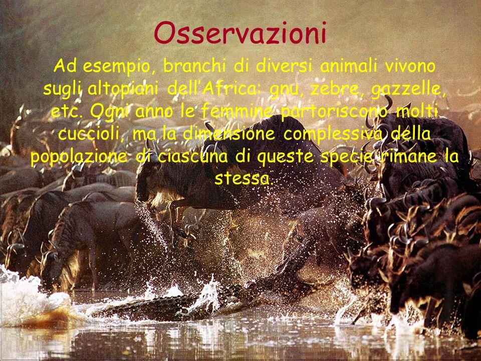 Osservazioni Ad esempio, branchi di diversi animali vivono sugli altopiani dellAfrica: gnu, zebre, gazzelle, etc. Ogni anno le femmine partoriscono mo