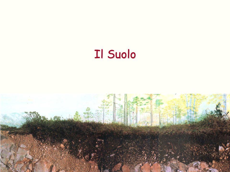 Protezione del suolo Luomo coltiva soprattutto piante per uso alimentare, piante che sottraggono al terreno grandi quantità di nutrienti che non riescono ad essere rimpiazzati dai cicli naturali: Il Suolo