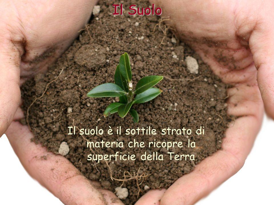 Il suolo è il frutto di un lento lavoro di sgretolamento delle rocce ad opera principalmente dei fenomeni atmosferici.