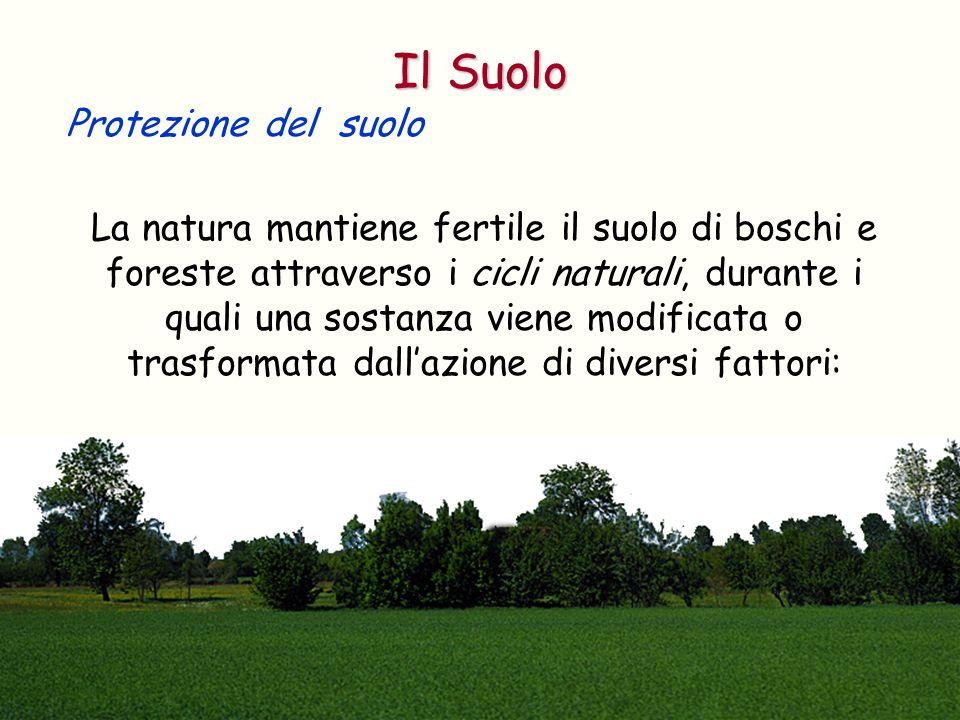 Protezione del suolo La natura mantiene fertile il suolo di boschi e foreste attraverso i cicli naturali, durante i quali una sostanza viene modificat