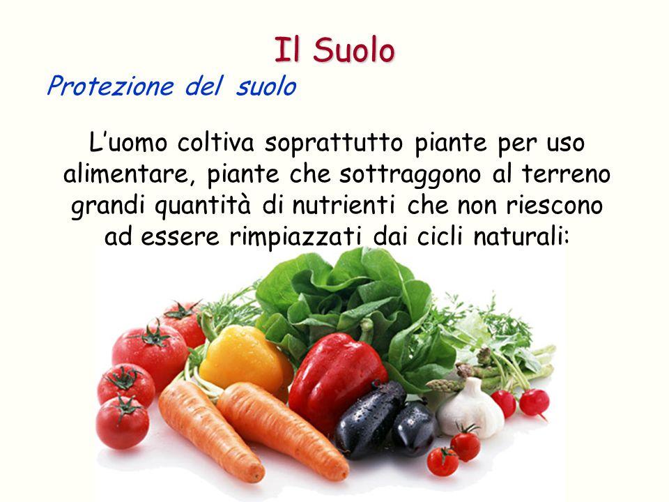 Protezione del suolo Luomo coltiva soprattutto piante per uso alimentare, piante che sottraggono al terreno grandi quantità di nutrienti che non riesc