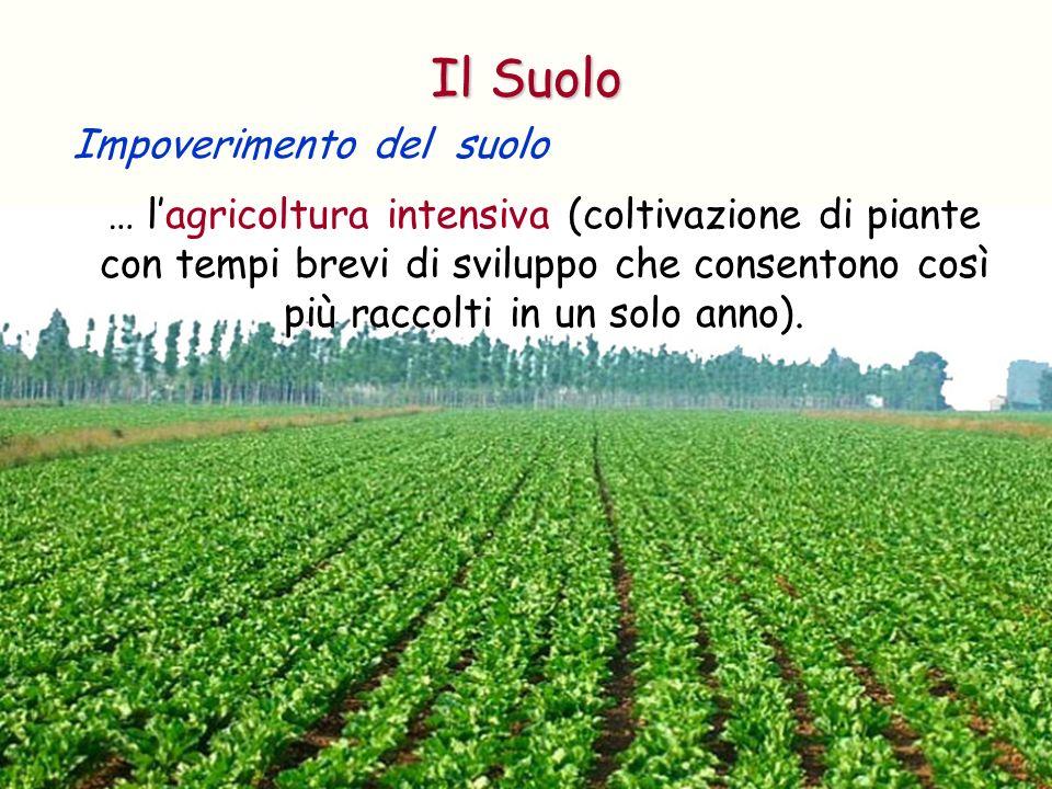 … lagricoltura intensiva (coltivazione di piante con tempi brevi di sviluppo che consentono così più raccolti in un solo anno). Impoverimento del suol