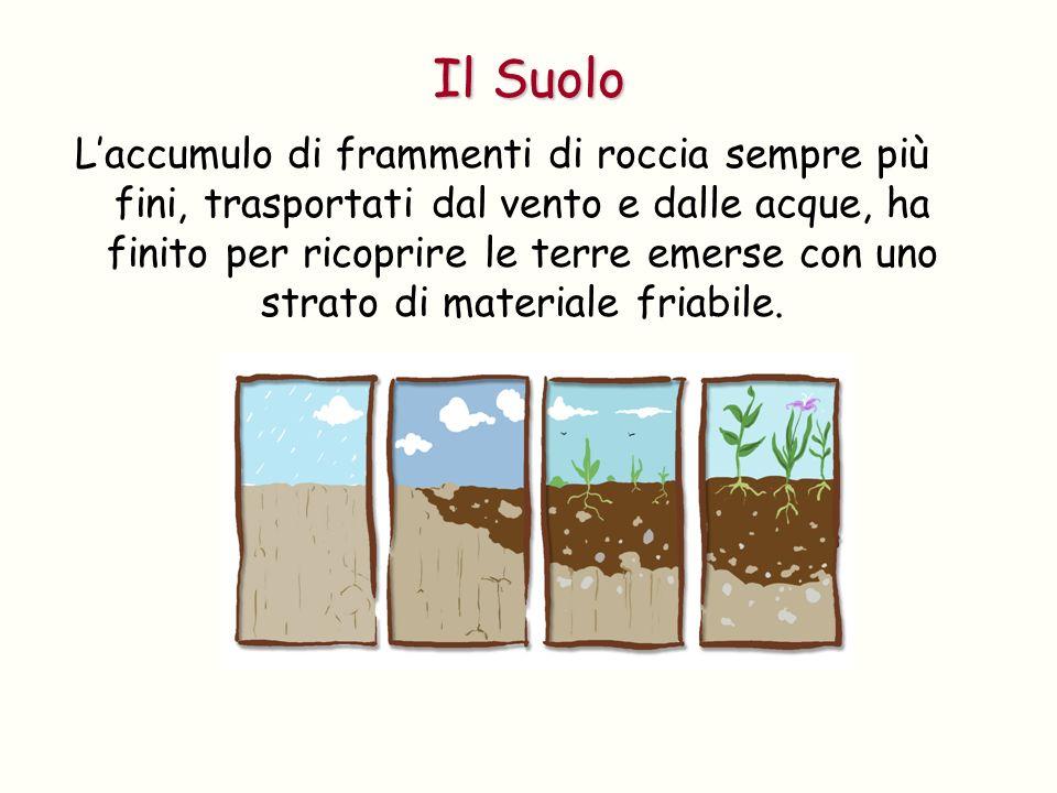 Alla formazione del suolo hanno contribuito e contribuiscono anche le attività degli esseri viventi.