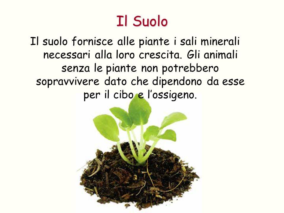 Il suolo fornisce alle piante i sali minerali necessari alla loro crescita. Gli animali senza le piante non potrebbero sopravvivere dato che dipendono