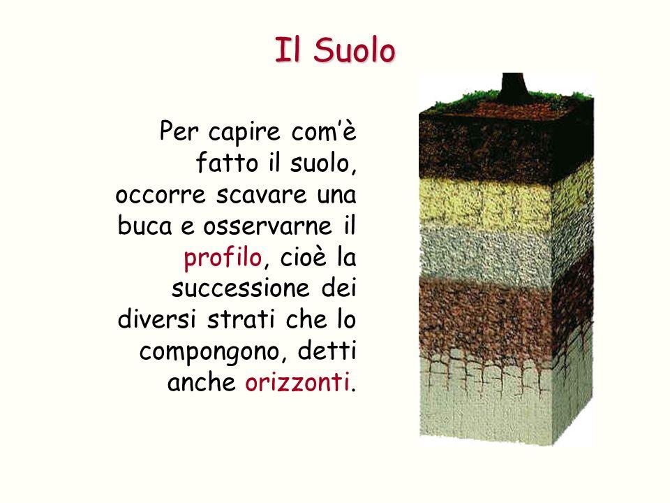 1.Il suolo è uno dei beni preziosi dell umanità.