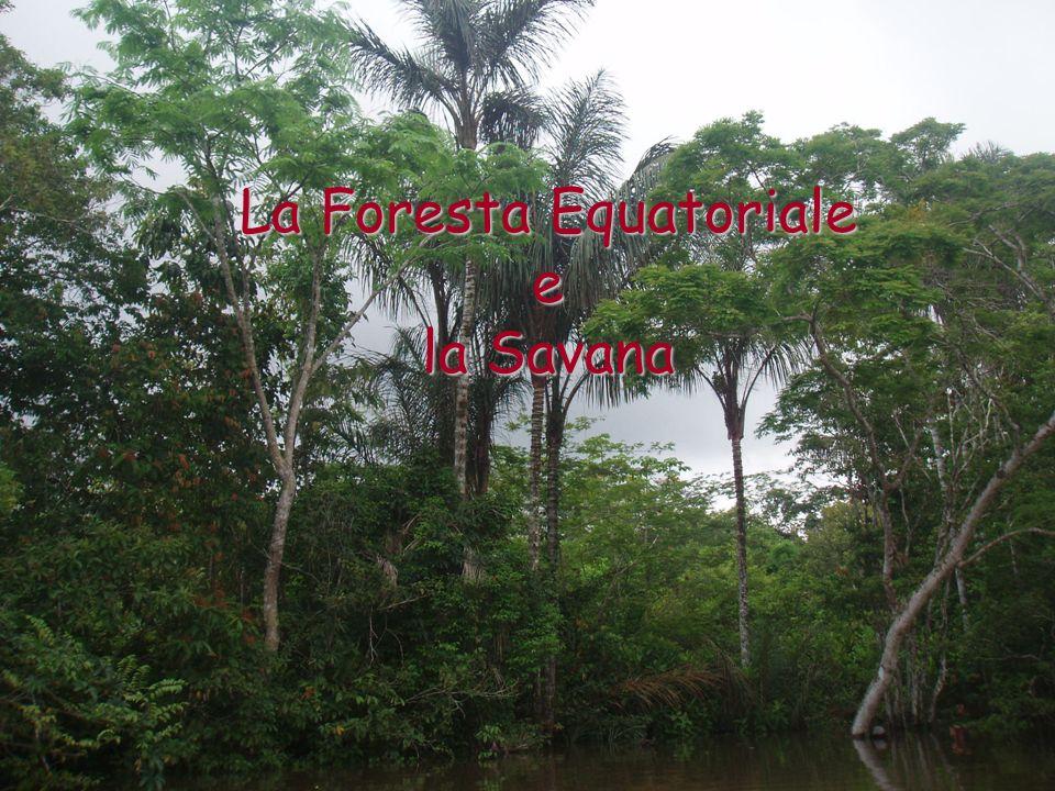 Nella stagione umida, cioè quando piove, lerba è verde e gli alberi sono ricchi di foglie; nella stagione secca, cioè quando non piove, lerba è secca e gli arbusti perdono le foglie, anche se non muoiono.