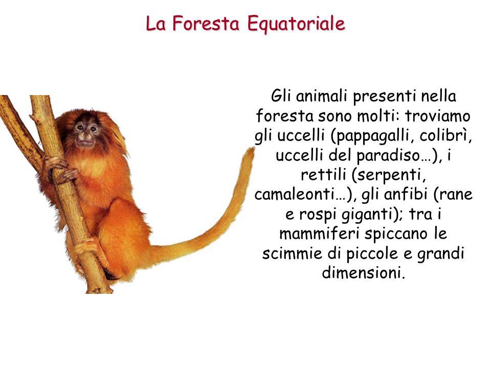 Gli animali presenti nella foresta sono molti: troviamo gli uccelli (pappagalli, colibrì, uccelli del paradiso…), i rettili (serpenti, camaleonti…), g